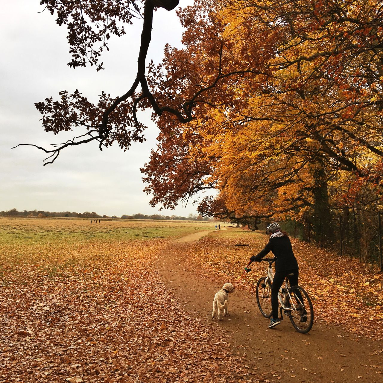 tree, dog, autumn, pets, one animal, animal themes, domestic animals, nature, mammal, full length, leaf, change, outdoors, day, pet leash, real people, one person, dog lead, beauty in nature, scenics, growth, sky, people