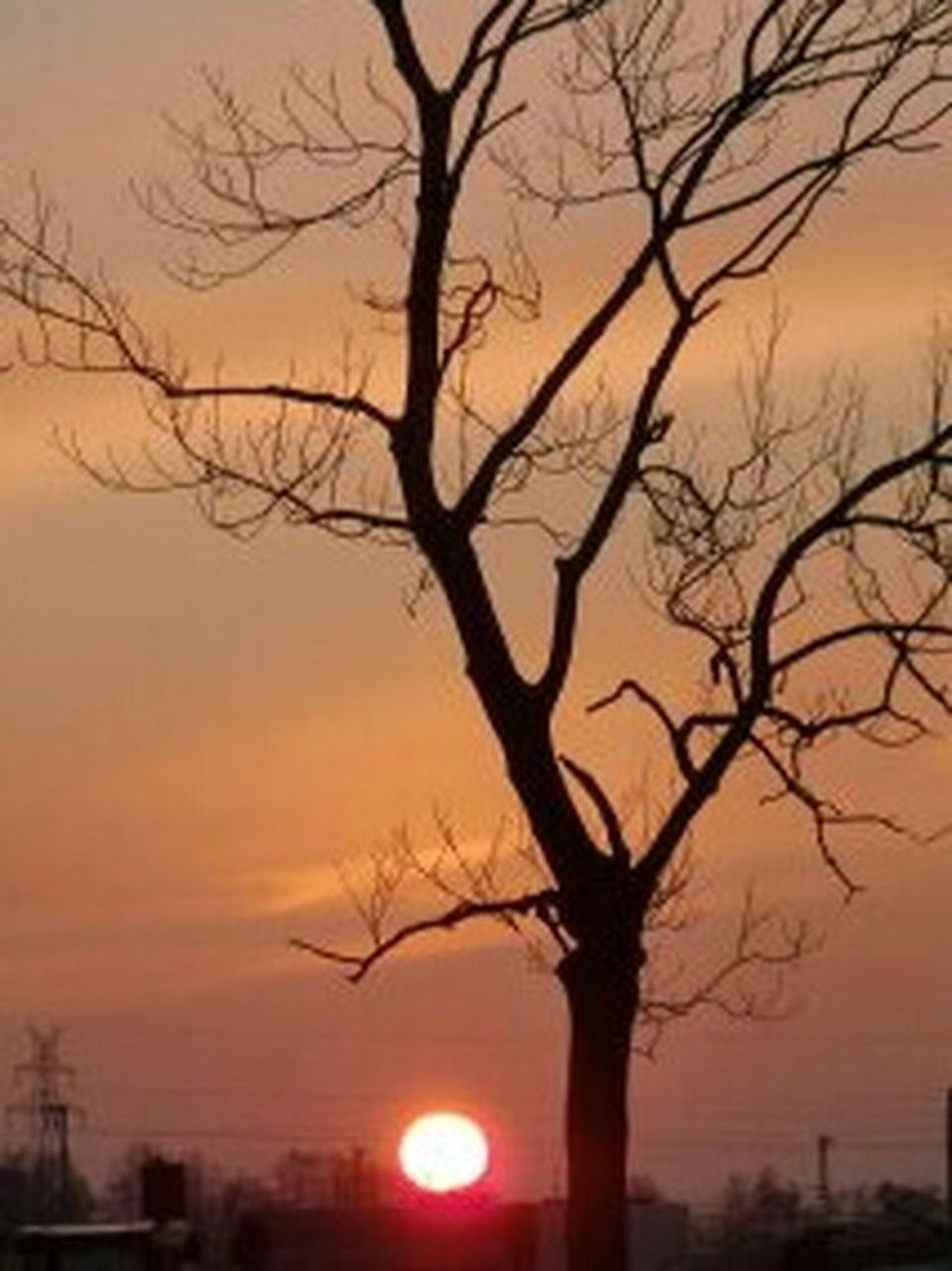 Bare Tree Sunset Silhouette Fog Tree Winter Scenics Outdoors City Sky Dusk Morning Beauty In Nature No People Branch Pastel Colored Night Multi Colored Nature Red