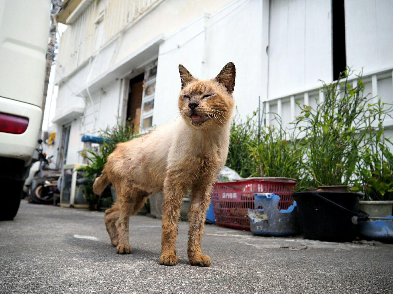 Cat Help Me Naha-shiすまん、助けてやれんにゃ、、、