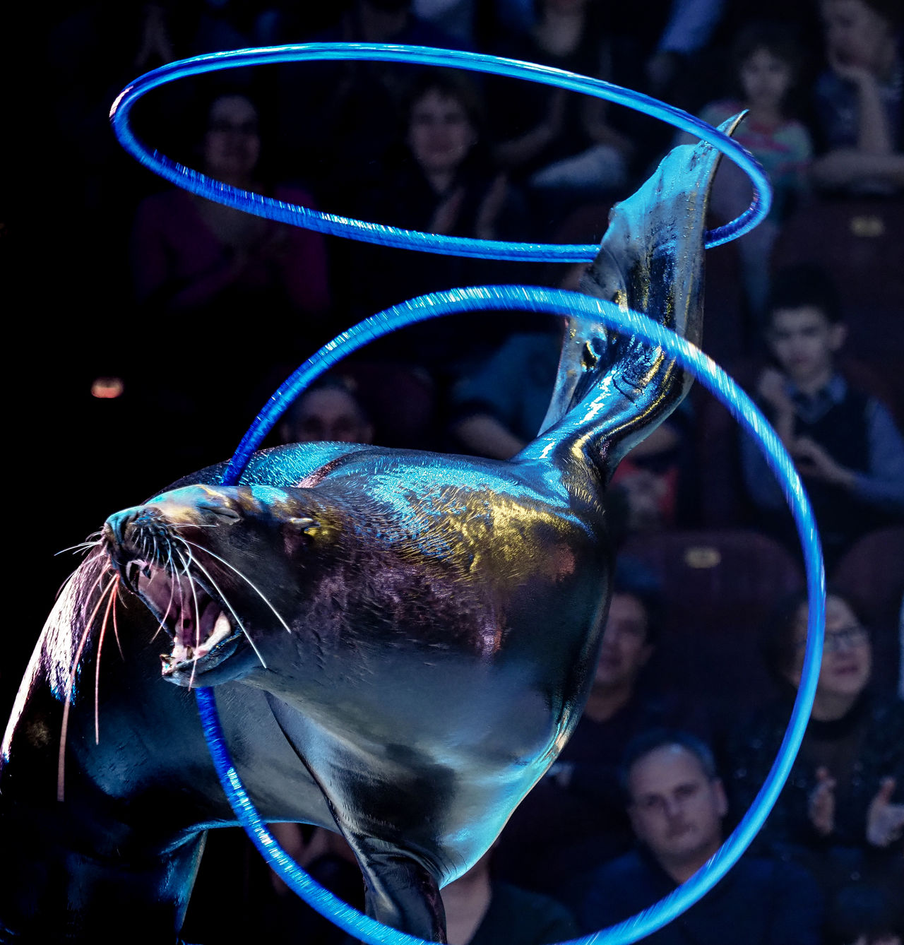 Russia, Moscow, Russian circus, circus, sea lion Animal Themes Black Background Blue Circus Close-up Day Fishbowl Fragility Mammal Moscow No People Pets Russia Russian Circus Sea Lion Swimming