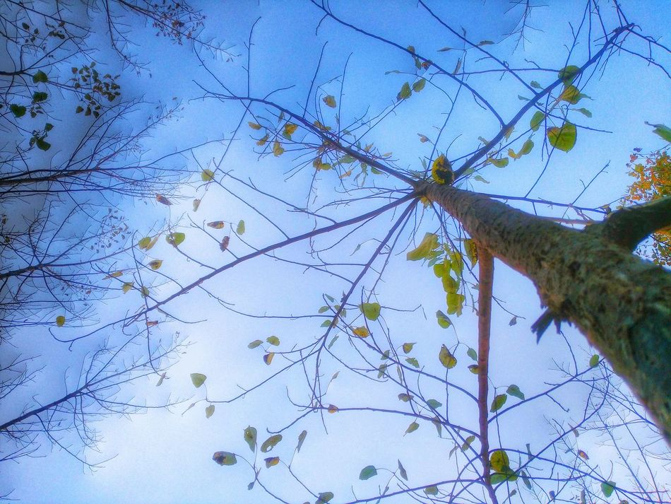 Treeshed Showcase: January Natural Photoddicted Greats_by_me Shahjahanpur Yu Yureka Photography