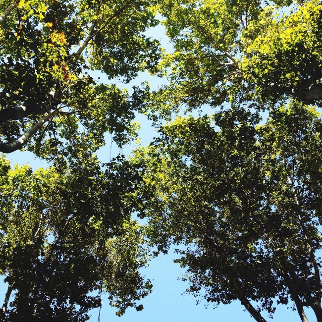 Southern french town. Tree Low Angle View Growth Branch Green Color Nature Beauty In Nature Sky