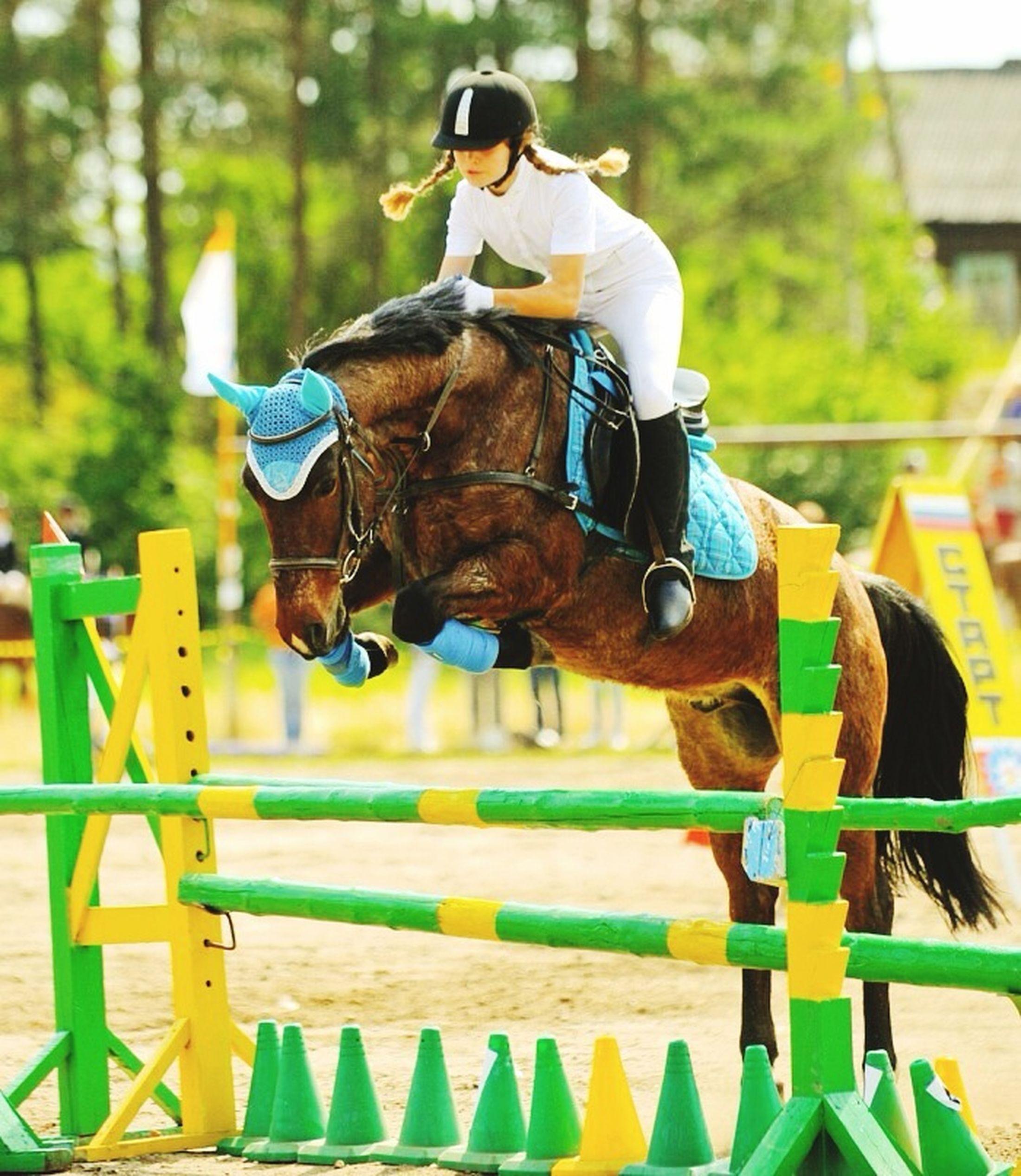 Ukhta соревнования на приз УГТУ 2011 Horse
