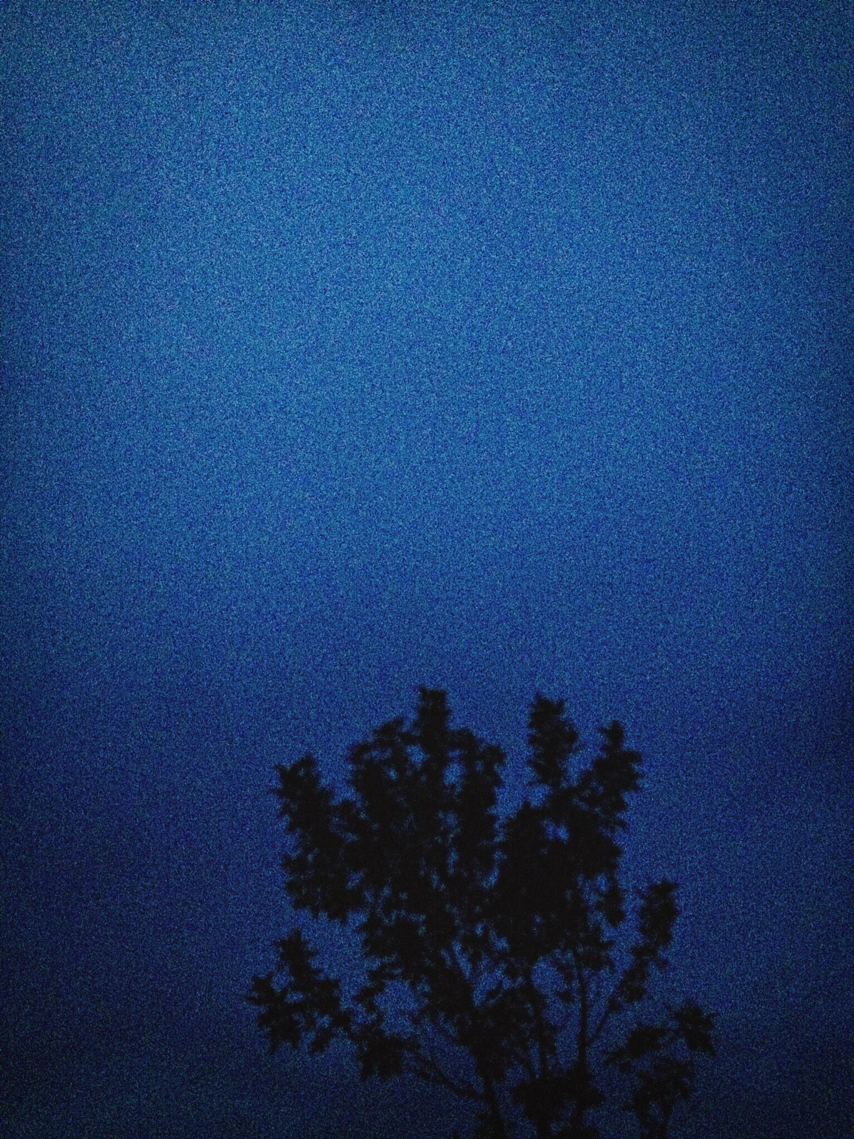 blue, low angle view, tree, sky, tranquility, beauty in nature, nature, silhouette, scenics, copy space, tranquil scene, growth, high section, dusk, outdoors, no people, idyllic, night, clear sky, cloud - sky