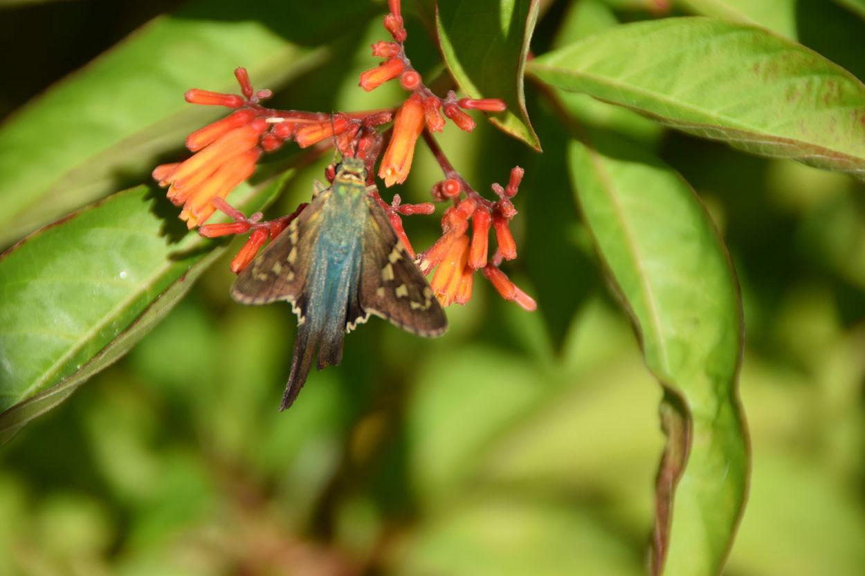 Moth migrating for the winter. Moth Moths Mothsofinstagram Mothselfie