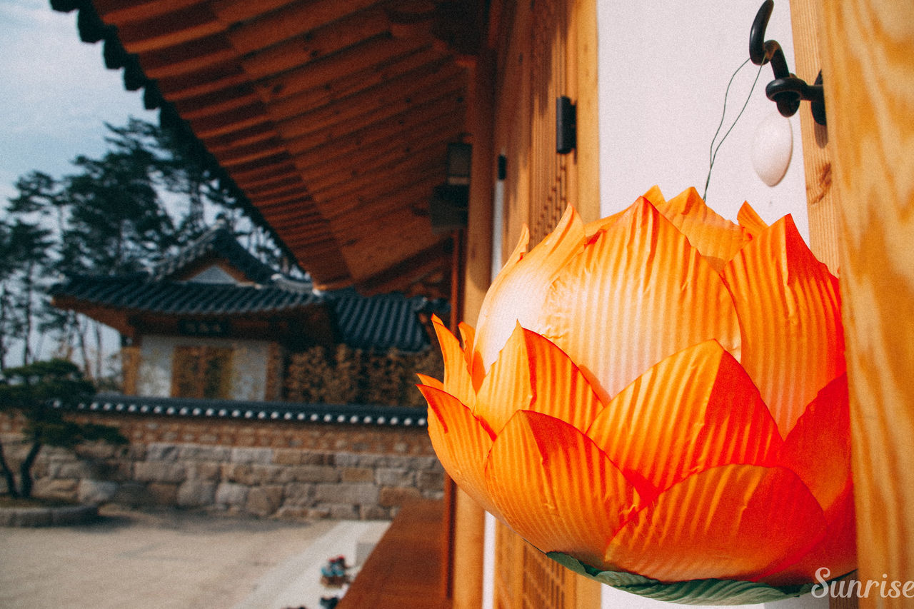Handmade lotus lantern 2016LLF Korea Lotus Flower Lotuslantern Lotuslanternfestival Orange Templestay Travel