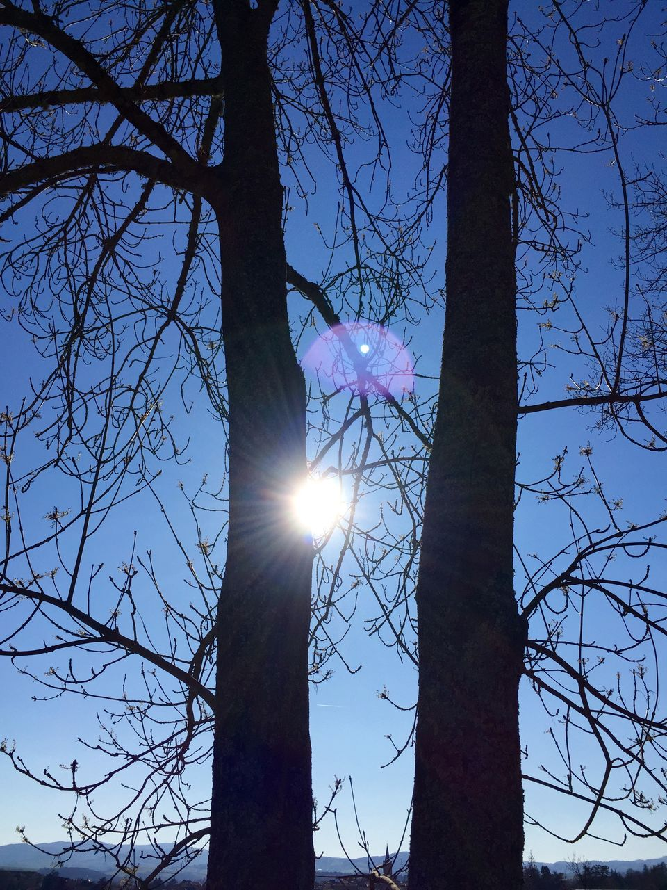 lens flare, bare tree, sun, tree, sunbeam, branch, tree trunk, sunlight, nature, low angle view, beauty in nature, no people, sky, outdoors, tranquility, day