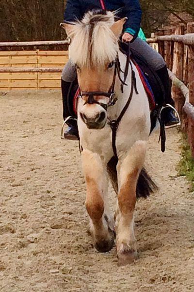 Horse Riding Saturday Afternoon Poney Enjoying Life Poney-club