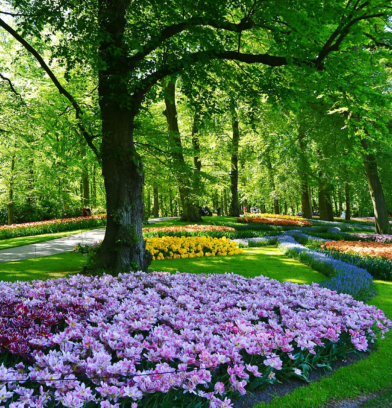Flower Nature Beauty In Nature Growth Freshness Fragility Park - Man Made Space Plant Petal No People Green Color Flower Head Tree Outdoors Day Tranquility Yellow Flowerbed Botanical Garden Tulips No People, Indoors Tulips🌷 Park Holland Beauty In Nature