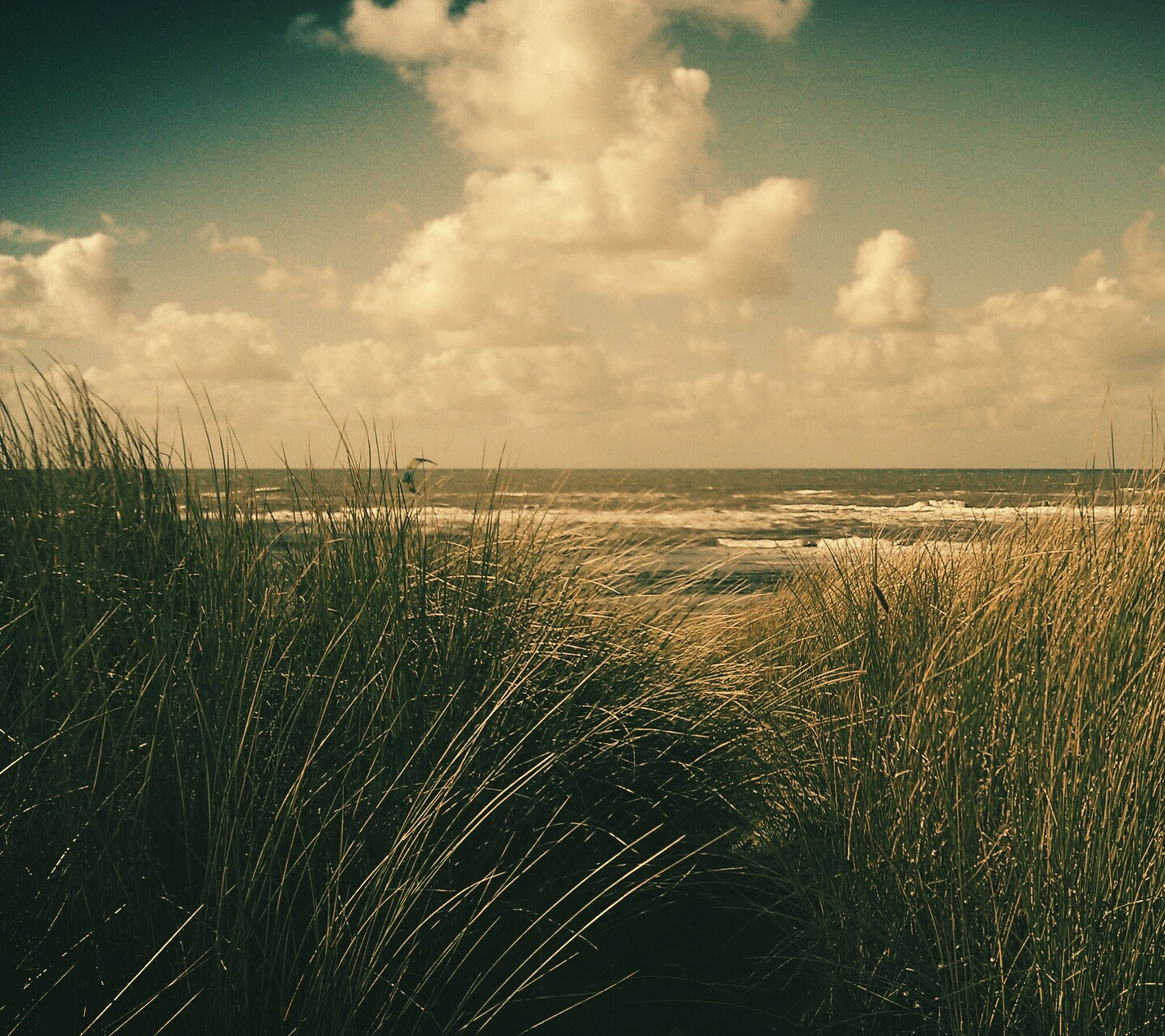 sea, water, sky, horizon over water, tranquil scene, tranquility, scenics, beauty in nature, nature, cloud - sky, beach, cloud, idyllic, outdoors, cloudy, plant, shore, no people, growth, remote