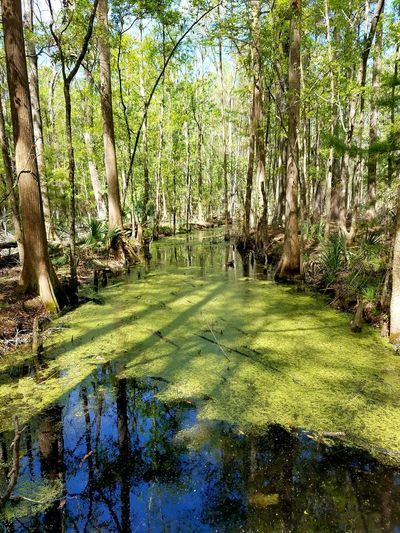 Green Color Nature Beauty In Nature Tree Tranquility No People Outdoors Tranquil Scene Day Tranquility Landscape Rural Scene Wetland Ravenel South Carolina. Cawcawcountypark Natural Parkland Agriculture Nature Forest Reflection Beauty In Nature Lake Plant Tree Sky Art Is Everywhere