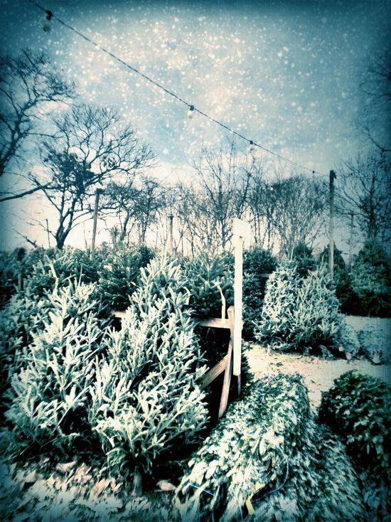 Christmas in Oreland Christmas
