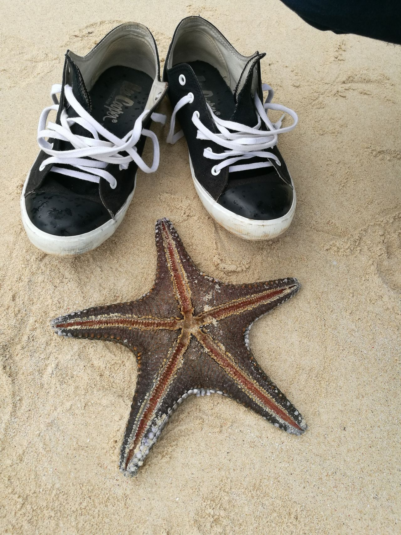 Starfish At Beach Nature Photography OpenEdit EyeEm Best Shots Eyeemnaturelover Exceptional Photographs Getting Inspired