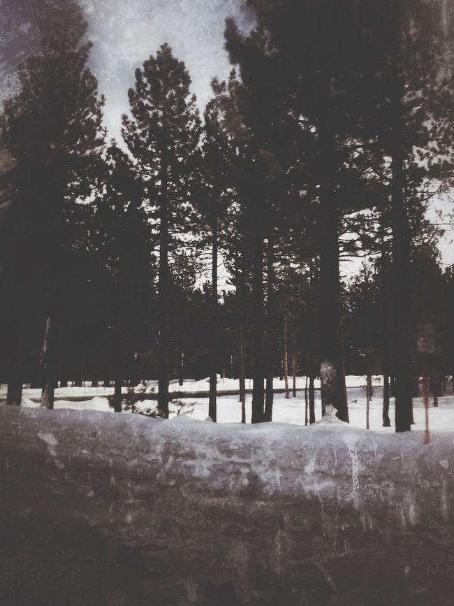 Haunted Trees Haunting Places Taking Photos From My Point Of View Hanging Out Check This Out Driving Around Drastic Altering Drastic Edit Snow ❄