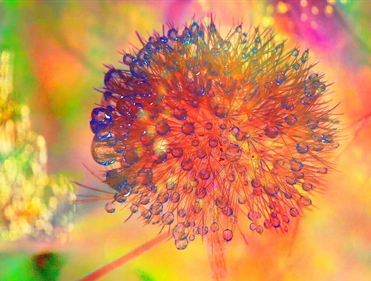 Nature Beauty In Nature Outdoors Multi Colored Abstract Macro Photography Nature Photography Waterdrops Dandelion Collection Cold Days Naturelover Colorful