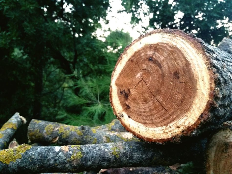 Tree Outdoors Log Close-up Day No People Nature Forest Growth Tree Ring