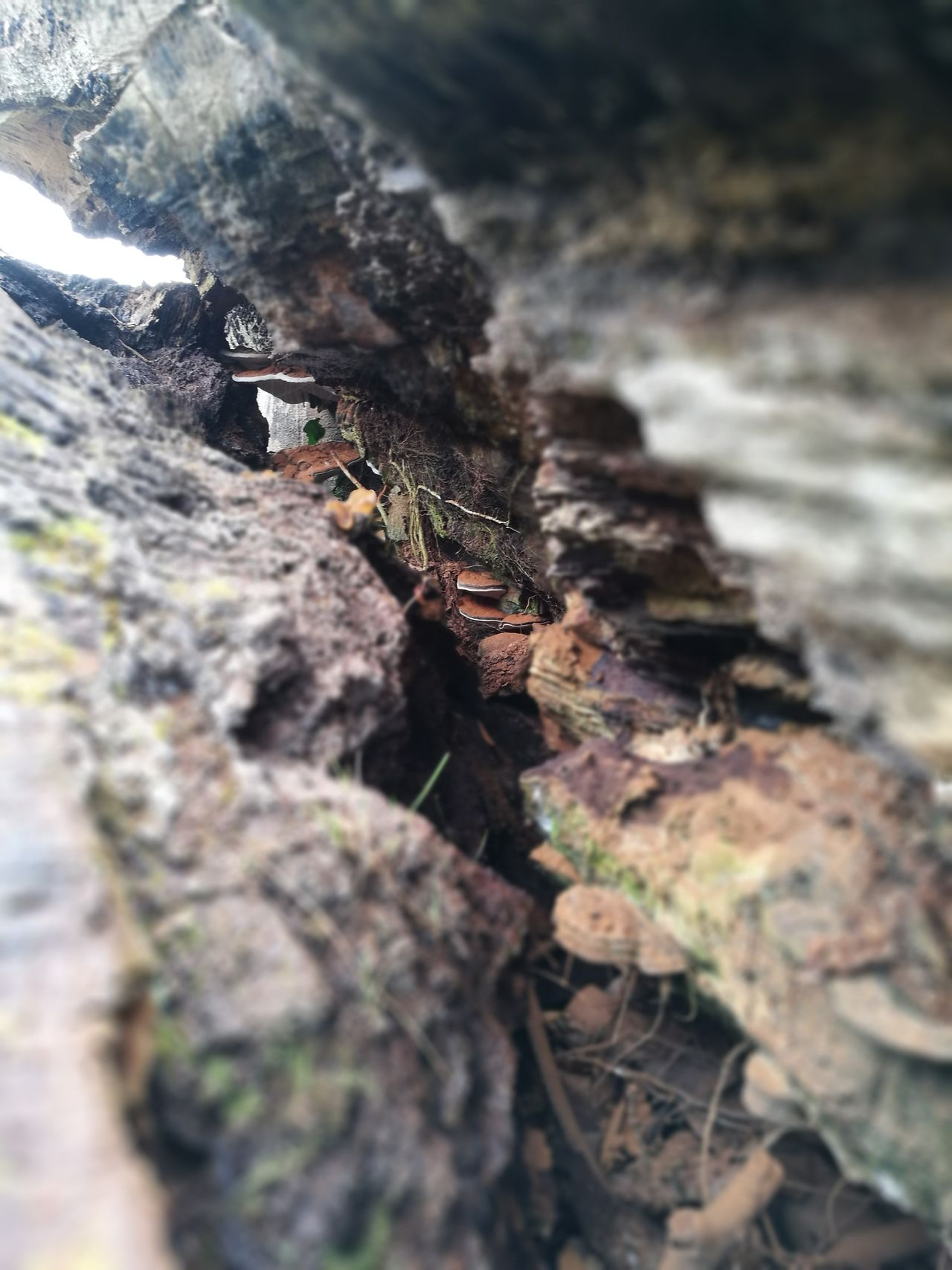 Nature Close-up Fungi Wood Fallen Tree Rotten Tree Crack Taking Photos