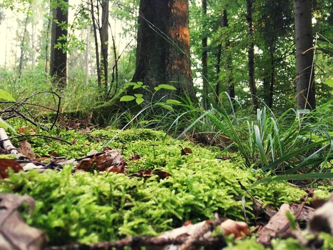 Forest Selective Focus Moss Tree Trunk Nature Growth Wilderness