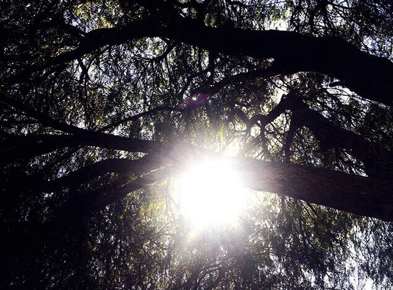sunbeam, tree, sunlight, sun, low angle view, lens flare, nature, forest, beauty in nature, bright, branch, outdoors, no people, tranquility, day, growth, tranquil scene, woodland, scenics, sky, tree trunk, leaf, tree area, freshness