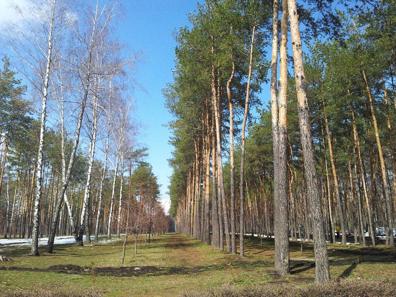 липецк Lipetsk Future Walking Around
