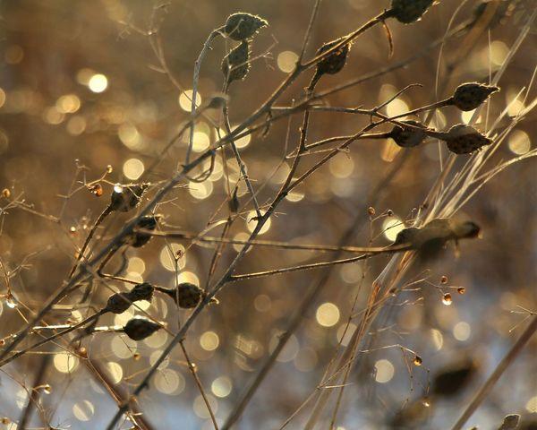 Dried grass in winter has its own magic.... Bokeh Bokeh Photography Bokehlicious Macro Macroclique Macro_collection Macro Photography EyeEm Best Shots Popular Photos Beautiful