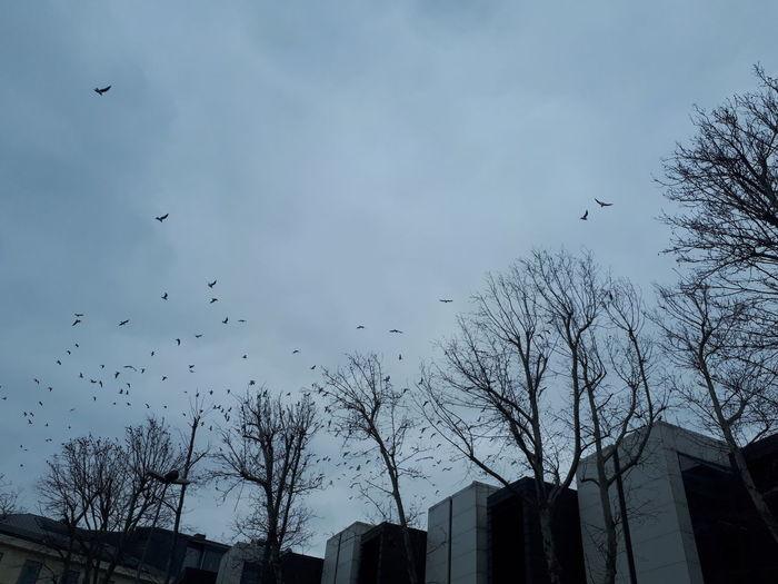 Bird Flying Flock Of Birds Large Group Of Animals Animals In The Wild Animal Themes Animal Wildlife