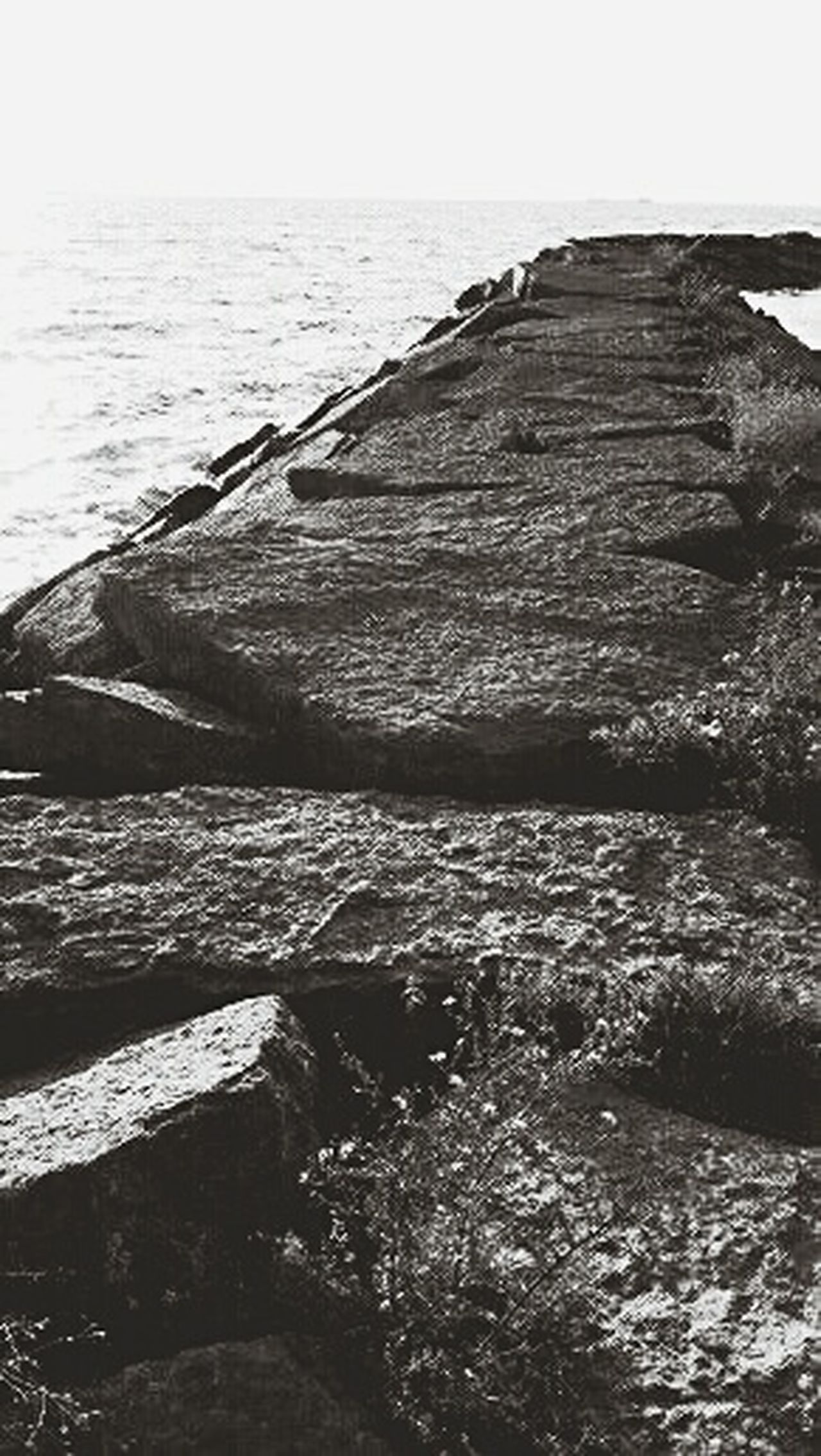 Westcott State Park Lake Ontario Water_collection Different Pathways Blackandwhite Photography