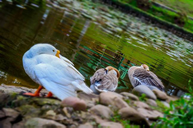 dhunia hahor dol.. #beauty #birds #landscape #natgeo #Nature  #wild Green Color Selective Focus Wildlife