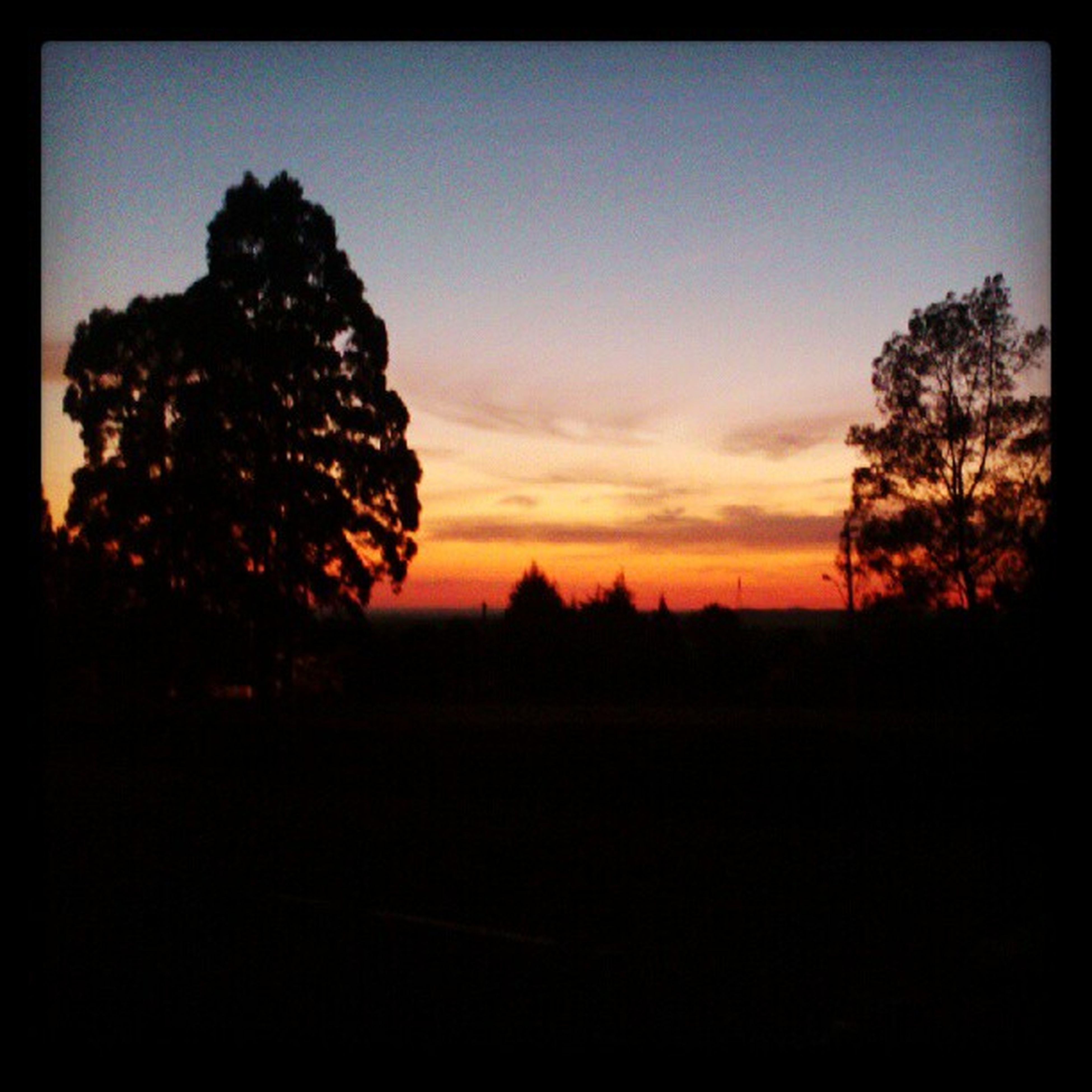 silhouette, sunset, tranquil scene, tranquility, tree, scenics, beauty in nature, sky, nature, landscape, orange color, idyllic, growth, transfer print, auto post production filter, outdoors, dark, non-urban scene, dusk, non urban scene