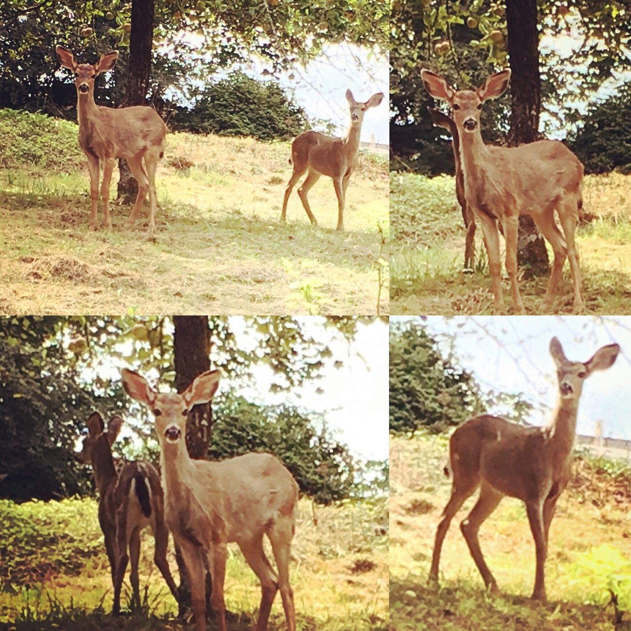 Deer Sighting Baby Deer Sweet Moments