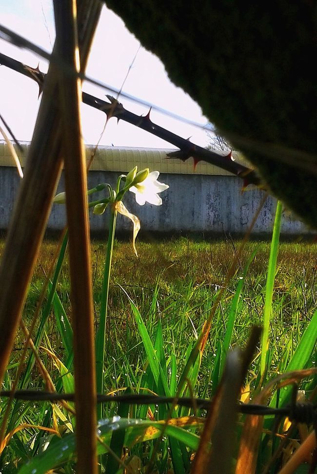 The Resilient Flower    The Resilient Hope And Dream Adversity Spring Fences & Beyond Flowers, Nature And Beauty Flower Whiteflower