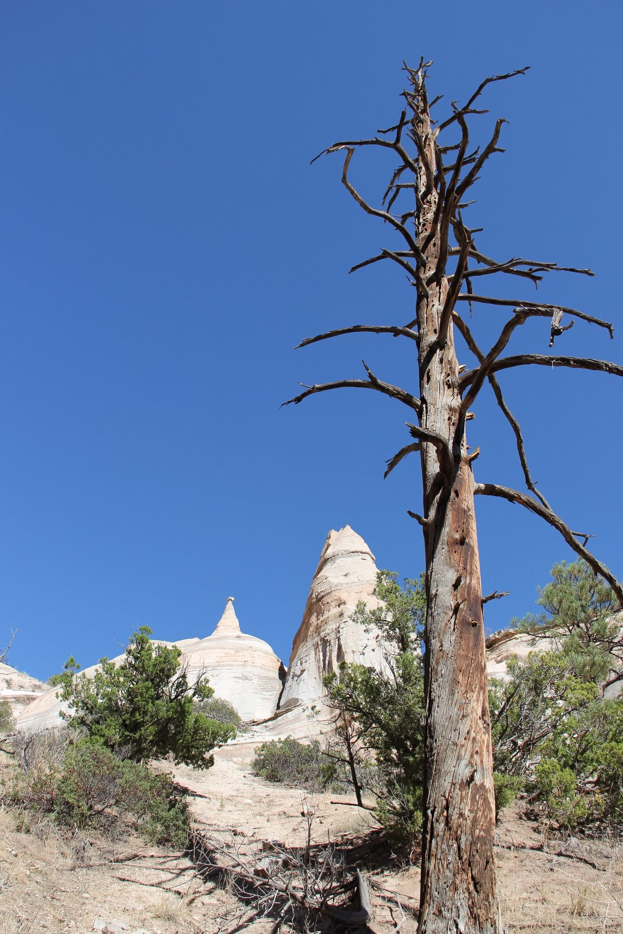 Clear Sky Landscape Tranquil Scene Solitude Tree Bare Tree Tranquility Blue Branch Remote Beauty In Nature Scenics Countryside Tree Trunk Low Angle View Nature Arid Climate Non-urban Scene Day Mountain Kasha-Katuwe Tent Rocks National Monument Weathered TakeoverContrast Rock Beauty In Nature