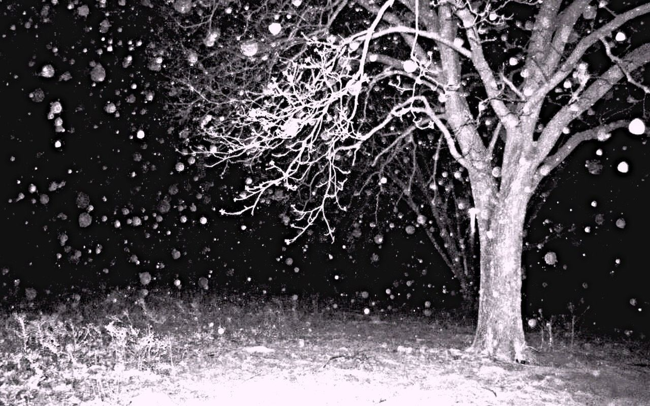 winter, cold temperature, tree, snow, snowing, night, drop, nature, motion, no people, snowflake, outdoors, black background, scenics, water, grass, beauty in nature, freshness, close-up