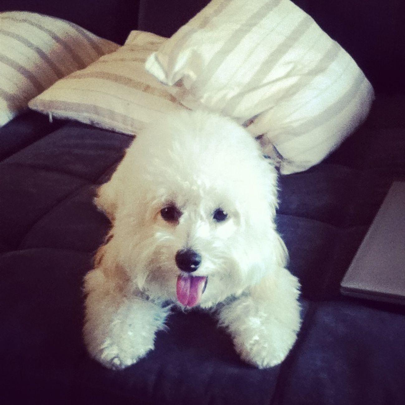 ma babe Pets DogLove Cute Pets Puppy