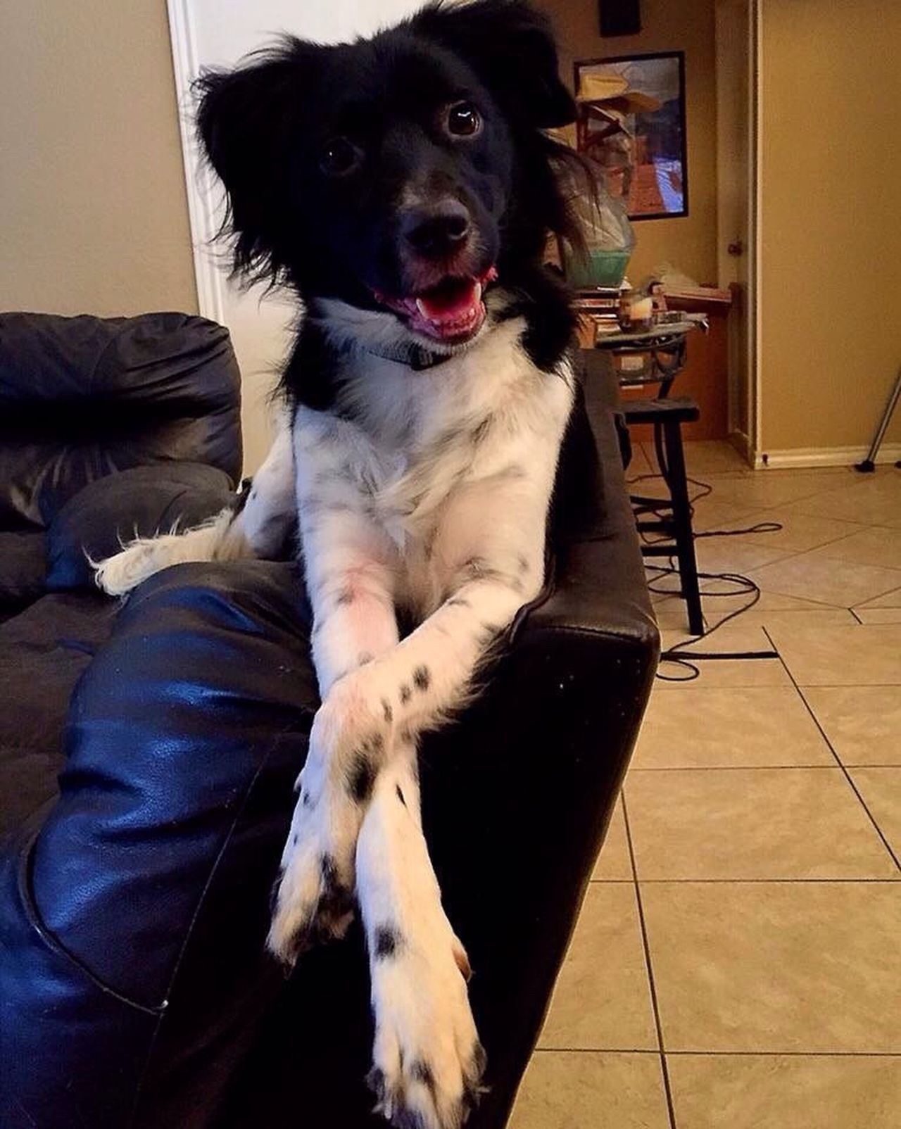 You Say You Miss Me? Hello World Enjoying Life Wanting A Treat Dog Border Collie