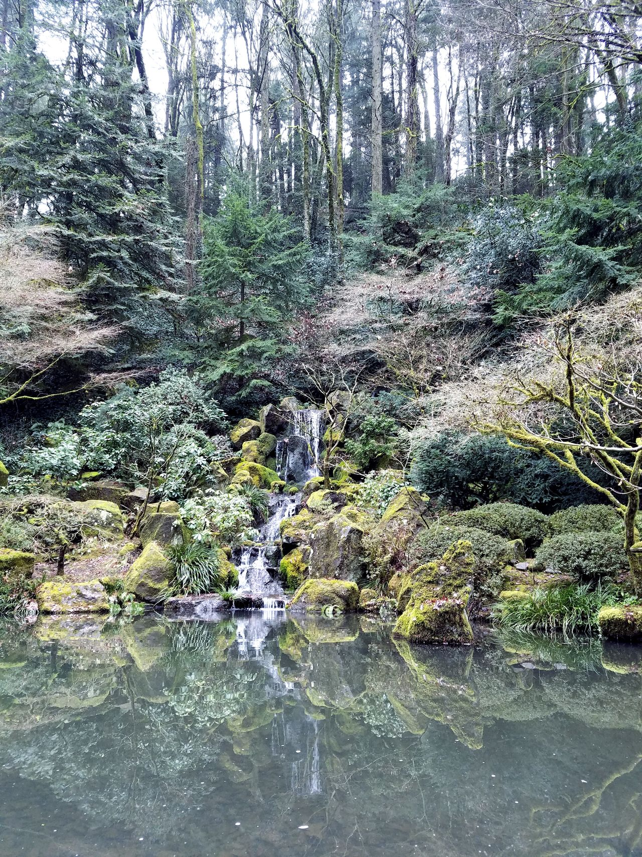 Reflection Water Tree Full Frame Nature Backgrounds Growth Beauty In Nature Outdoors Day Close-up No People Sky Freshness Beauty In Nature Outdoors❤ Beautiful Nature Beauty Is In The Eye Of The Beholder Beautyinnature  Japaneese-gardens