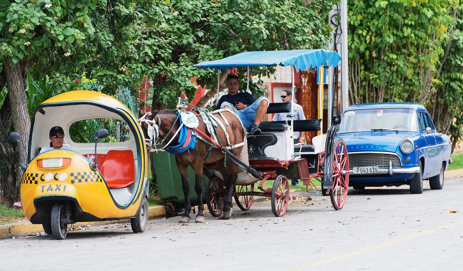 Varadero, Cuba - September 11, 2016: Horse-drawn carriage in Varadero Cuba Animal Themes Classic Cuba Collection Havana Historic Horse-drawn Horse-drawn Carriage Tourism Traditional Transportation Varadero, Cuba