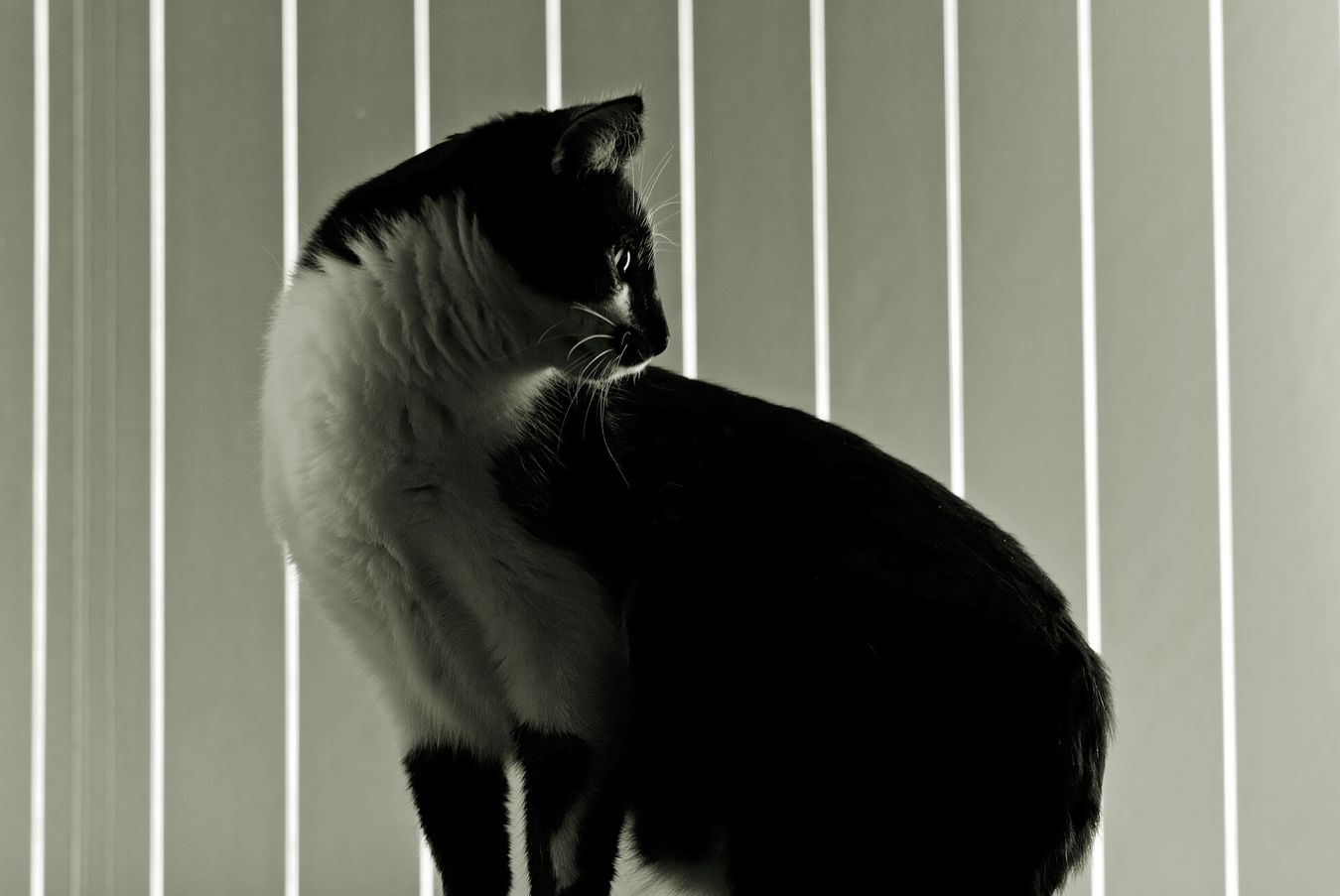 My Cat Cats Animal Love Monocrome Black & White Light And Shadow Silhouette 35mm 1.8 Nikon