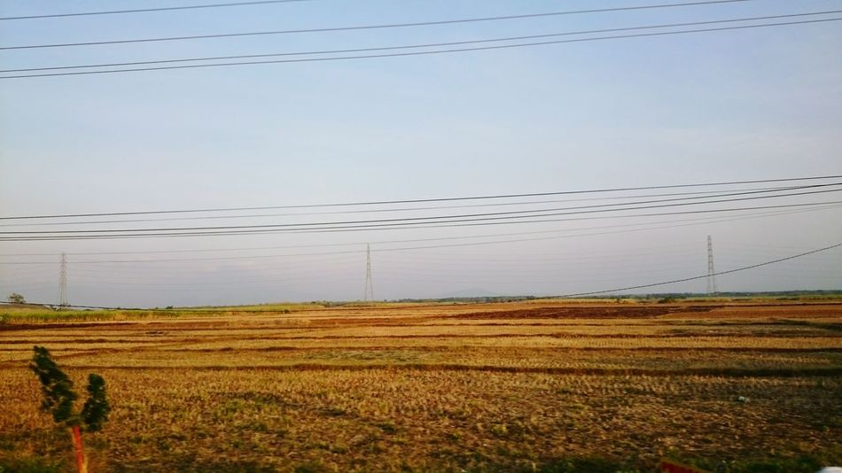 Rice farm in Rembang. Central of Java.Nature On Your Doorstep