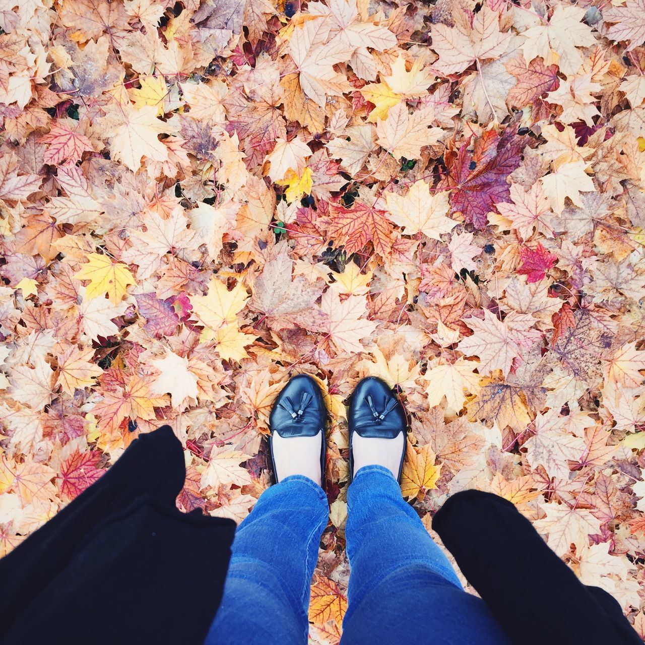Beautiful stock photos of leinwand,  Autumn Collection,  Beauty In Nature,  Change,  Day