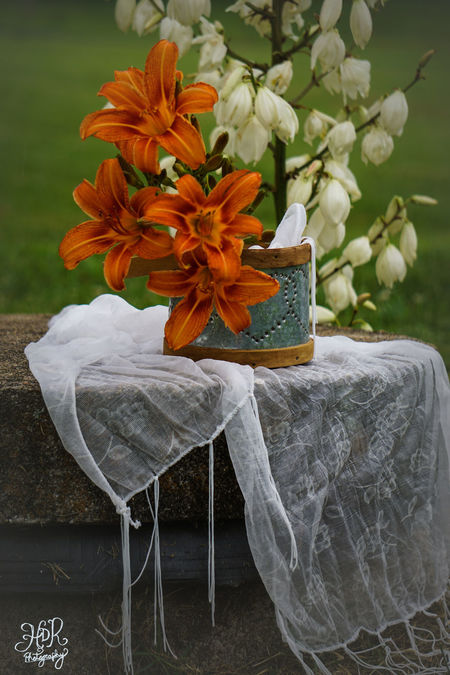 Day Flower Flower Head Fragility Milkweed Nature Outdoors Propstyling