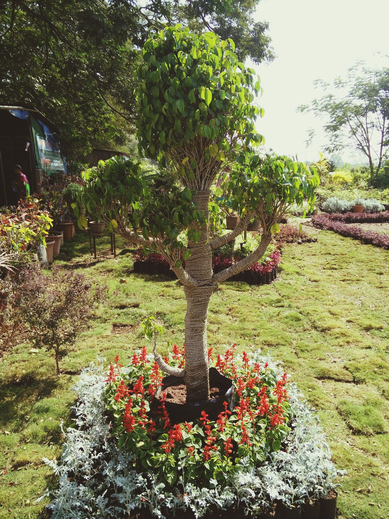 Tree Growth Nature No People Outdoors Flower Sky Day Beauty In Nature Freshness