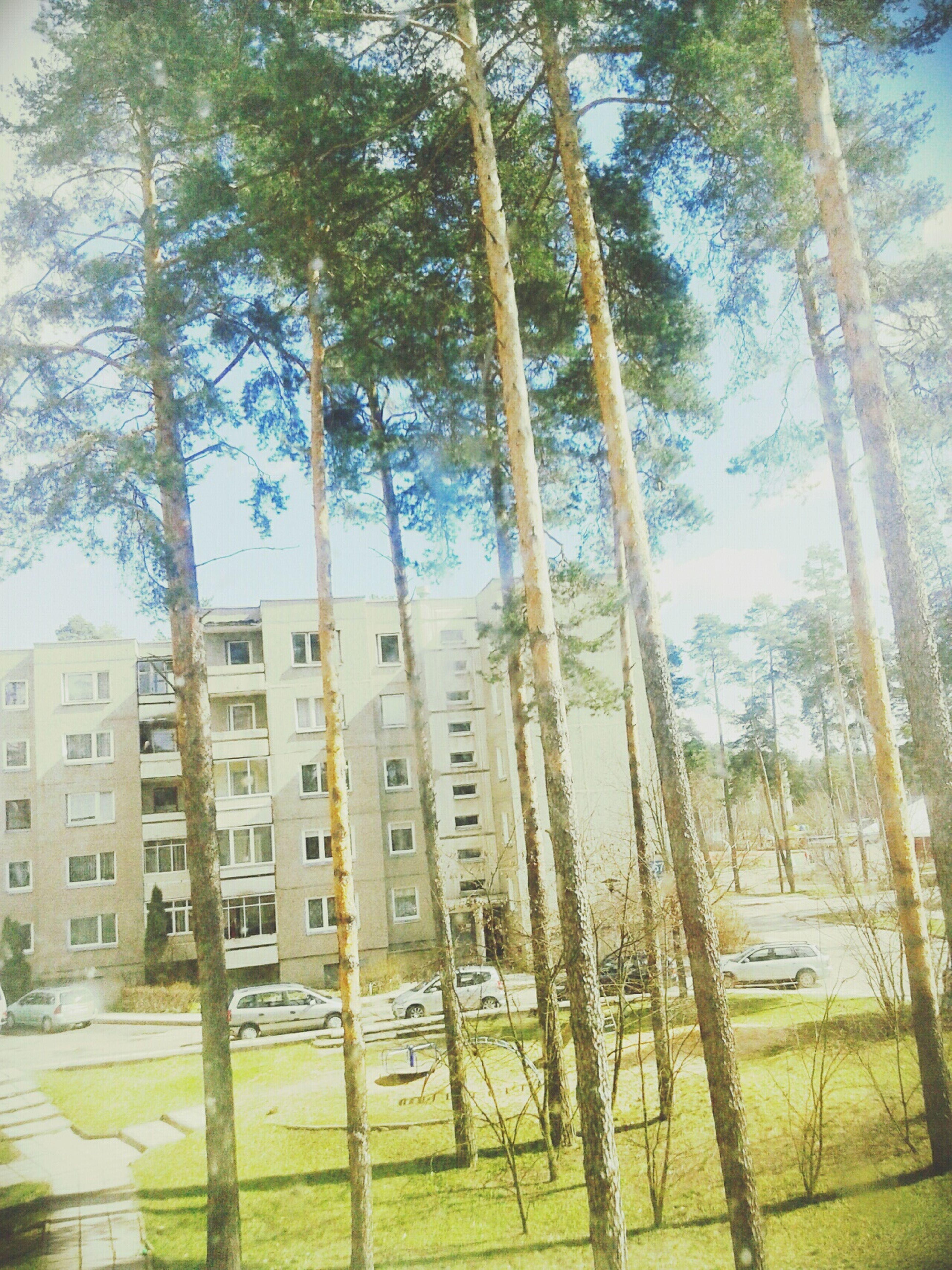 Trees Sun Weather Sunshine Sun Home Grandmother