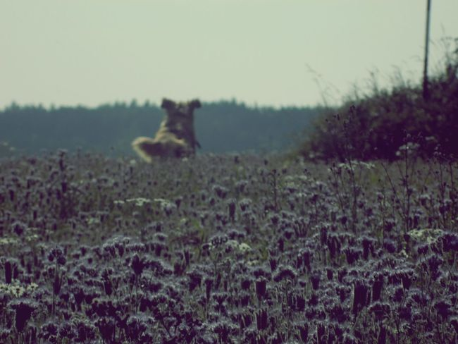Walk With My Crazy Dog Meadow Flowers Meadow Czech Republic Mother Nature Freedom Summer Summertime Flowers Holiday Crazydog