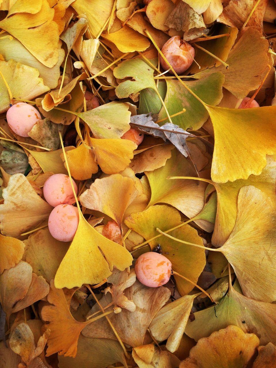 Full Frame Shot Of Autumn Leaves On Field