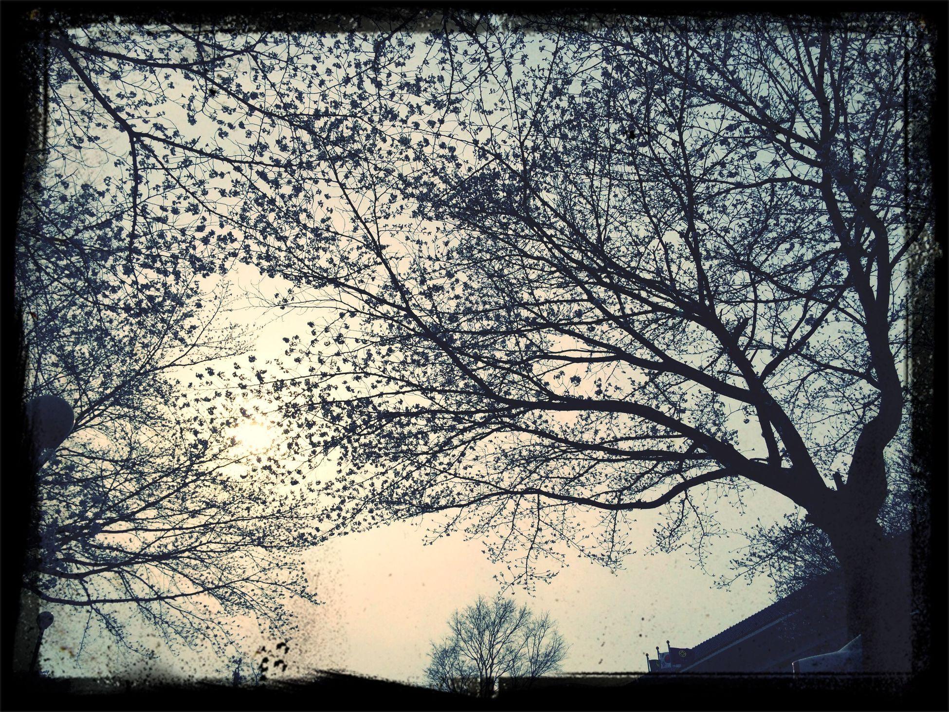Korea Jinju 연암도서관 Cherry Blossoms