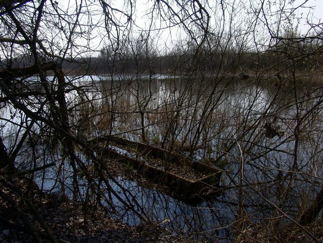 Lake Trees Boat Sunk Underbrush Landscapes With WhiteWall