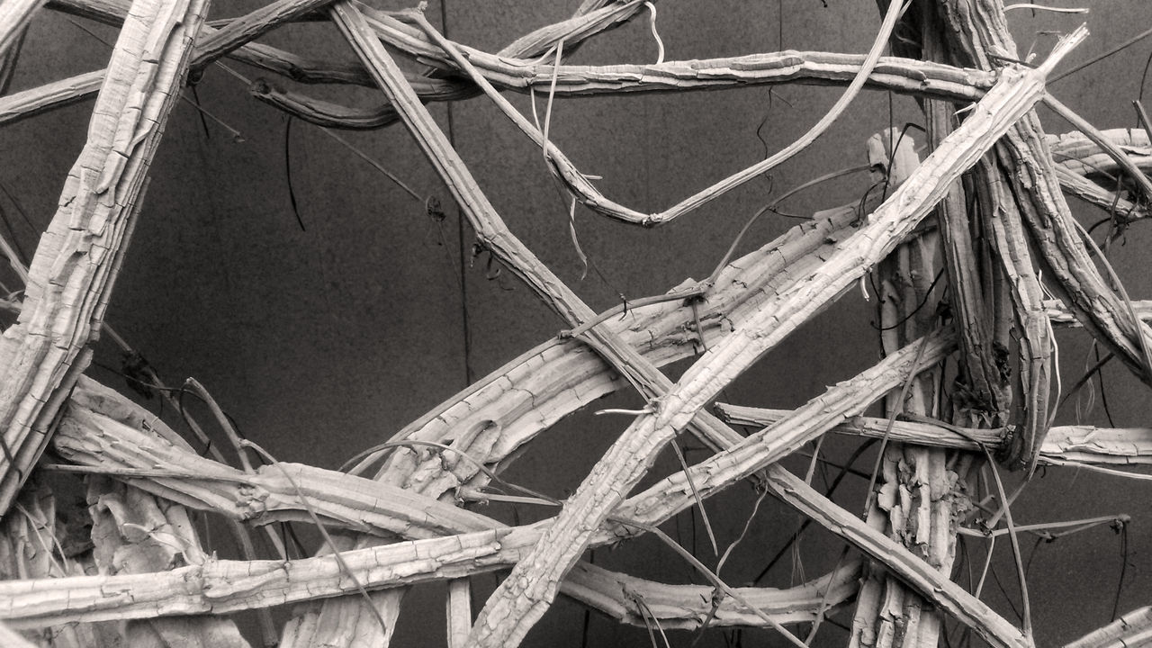 Black And White Deadwood  Dried Plant Intersections Of Branches Low Angle View Minimalism No People Outdoors