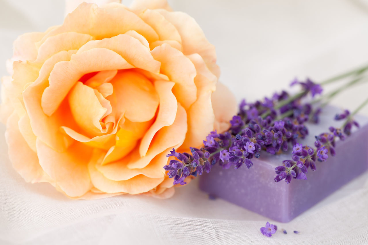 Fresh lavender and rose bloom and lavender soap bar Aromatherapy Copy Space Wellness Beauty In Nature Close-up Day Fabric Background Flower Flower Head Fragility Fragrance Freshness Lavender Nature No People Odor Petal Rose - Flower Smell Soap Bar Spa White Background