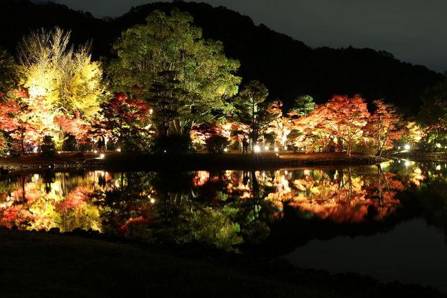 紅葉 Canon Eos  秋 田舎 ライトアップ 趣味